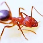 夢占いで蟻の心理的意味5つ!あなたはどれ?