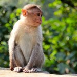 夢占いで猿の心理的意味5つ!あなたはどれ?