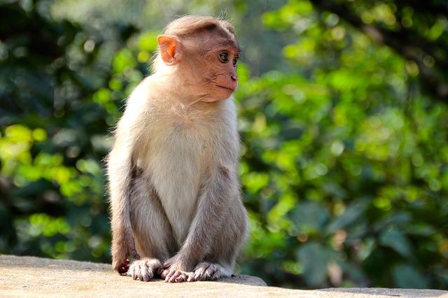 monkey-1028659_640
