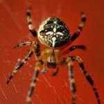 夢占いで蜘蛛は?驚愕の4つの意味を大公開!