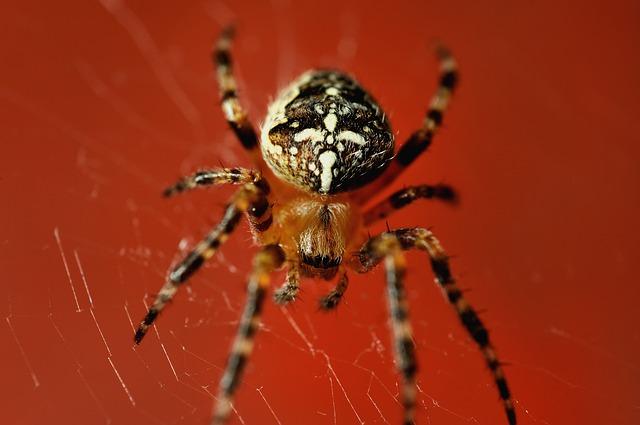 spider-699036_640